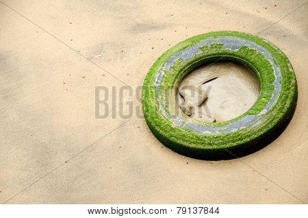 Tire On The Beach