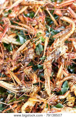 Pile Of Fried Grasshopper.