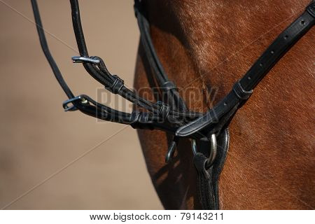 Close Up Of Martingale On Brown Horse