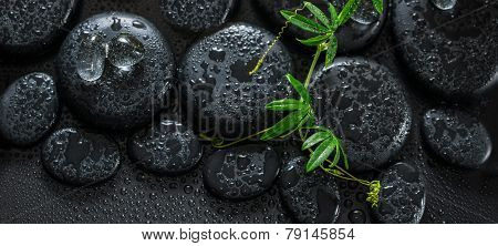 Beautiful Spa Still Life Of Green Twig Passionflower With Tendril And Ice On Zen Basalt Stones With