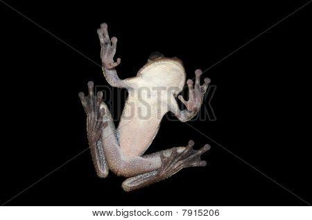Frog Bottom