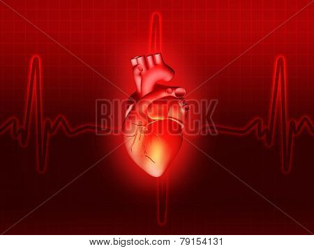 Heart Disease 3D Anatomy Illustration Red
