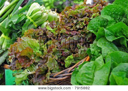 Variations of Lettuce