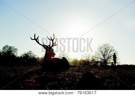 Silhouette of red deer lying in autumnal park in late afternoon light, with two people walking past the background.