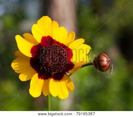 Small Fly And Flower