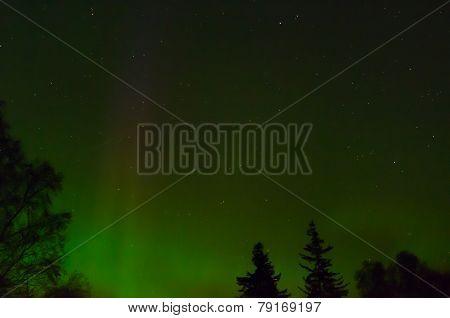 Aurora Outlines Trees