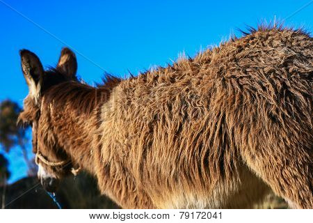 donkey back
