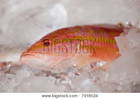 A Fresh Fish On Ice At The Market.