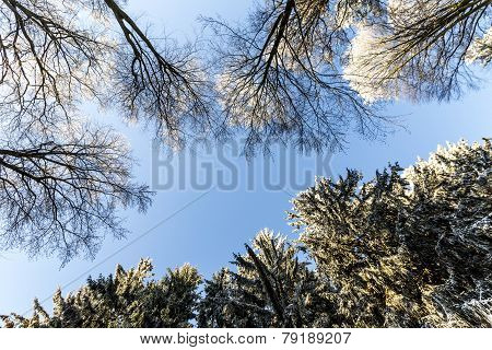 Snow Covered Branches Of A Tree Under Blue Sky