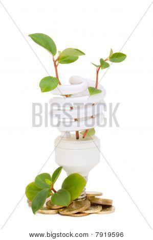 Energy Saving Lamp With Green Seedling On White