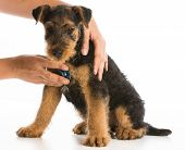 stock photo of veterinary  - veterinary care  - JPG