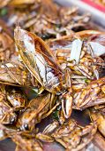 pic of water bug  - Heap Of Fried giant water bugs Close Up Shot - JPG