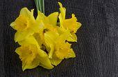 image of jonquils  - Yellow jonquil flowers on dark wooden background - JPG