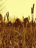 picture of alabama  - This is Alabama USA swam grasses in yellow tones - JPG