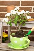 stock photo of plant pot  - Flowers in pot on stepladder - JPG