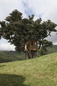 stock photo of mud-hut  - The traditional Ethiopian house on a tree - JPG