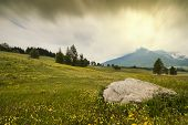pic of interrupter  - A big rock is interrupting a meadow full of yellow flowers - JPG