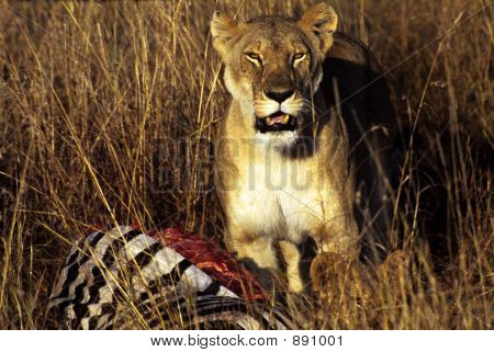 Lion Over Kill