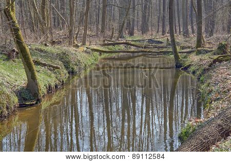 The river flows through the deciduous forest