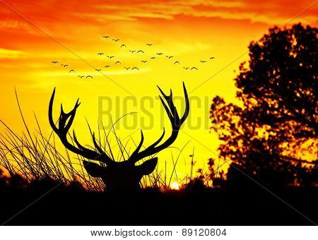 deer in the forest at sunrise