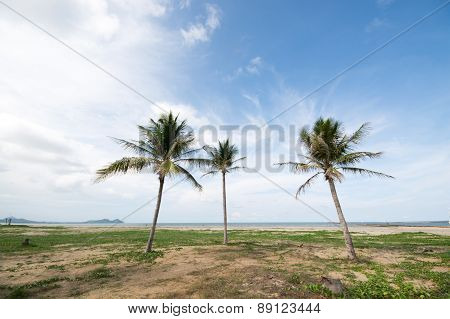 An Image Of Three Nice Palm Trees In The Blue Sky With Some Clouds