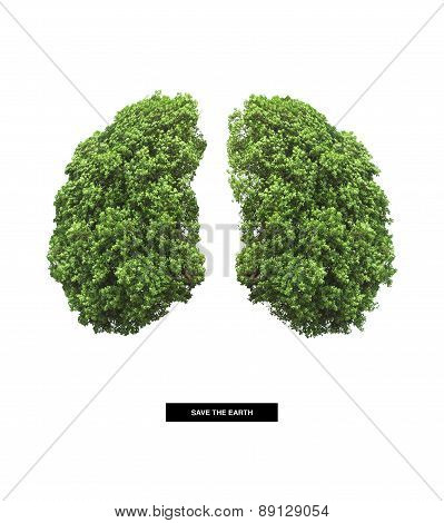 lung of earth