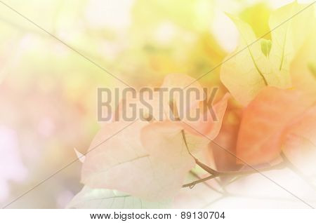 Flowers In Soft Style For Background