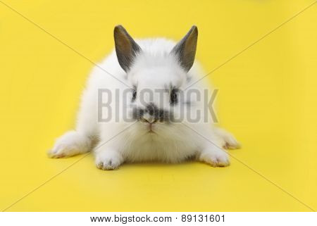 Small Rabbit