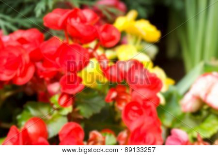 Blurry Defocused Image Of Red Begonia Flower For Background