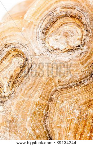Ancient Petrified Wood Closeup