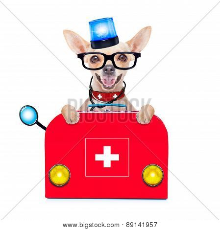 Medical Emergency Doctor Dog