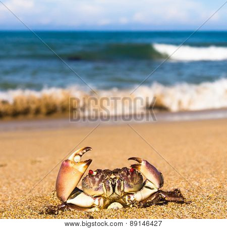 Seafood Posing Cute Animal
