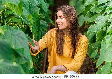 Close up of woman holding fresh cucumbers