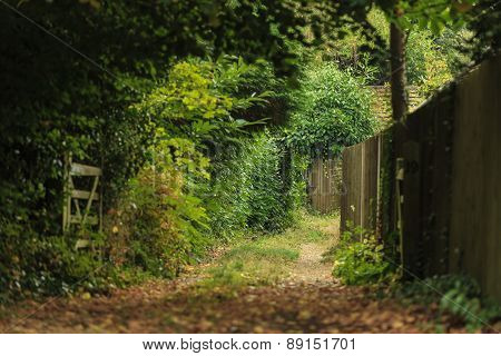 Nature Summer Landscape. Countryside View And Rustic Gate
