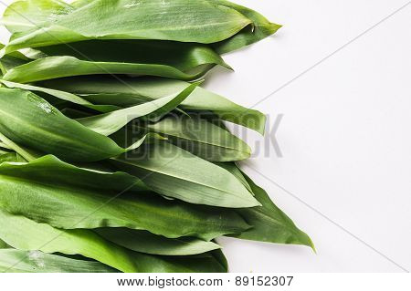 Bunch Of Fresh Green Rams Onion Or Ramsoms
