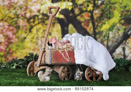 An adorable newborn sleeping contentedly outside under blossoming trees  in rustic old, hay-filled  wagon.