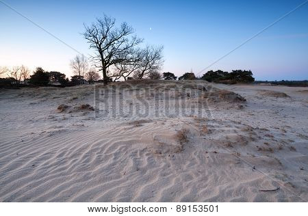 Sand Dunes, Tree And Moon