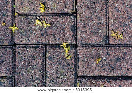 Flowers On Tiles Outside