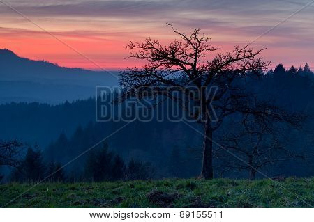 Tree In Mountains At Dramatic Sunset