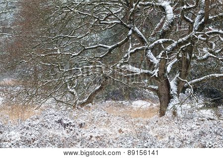Tree In Snow During Winter