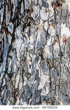 Rough Bark On An Old Tree