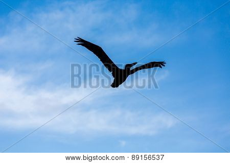 Sillouette Of Pelican Against Sky