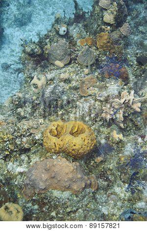 Living Reef