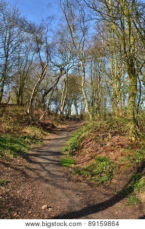 Crossgates Woodland