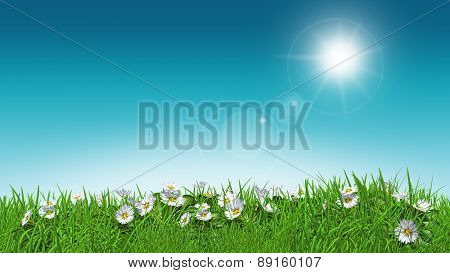 3D render of daisies in grass with a sunny sky