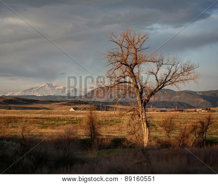 Tree in foreground in colorado sunrise