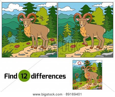 Find Differences (urial, Wild Sheep)