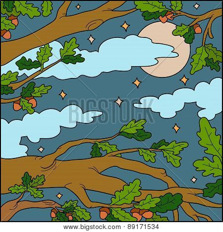 Vector Illustration, Natural Background (night Forest)