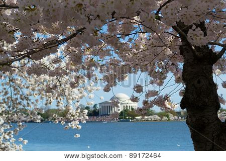 Thomas Jefferson Memorial Surrounded By Flowers