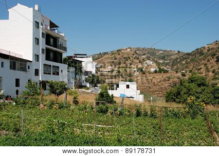Allotments by apartments, Torrox.